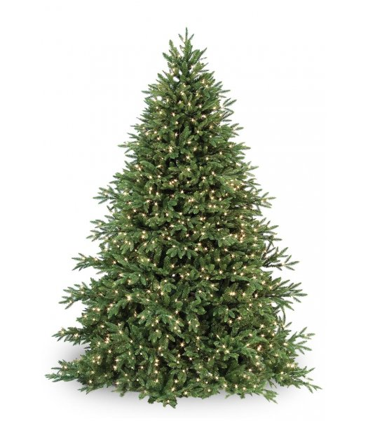 CLP7304  LED 6.5 FT Prelit Warm White CAROLINA FIR Christmas Tree, 700 light count 10 YEAR WARRANTY